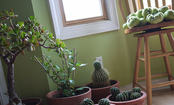 8 Mistakes to Avoid for the Happiest Houseplants