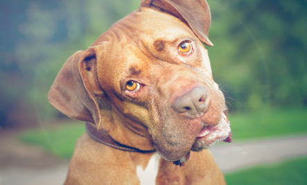 A Vet's Advice On When To Neuter Your Pet | Care2 Healthy Living