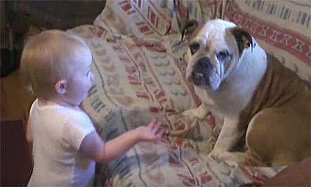Daily Cute: Baby Argues with Bulldog