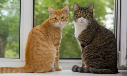 Dealing with Urine-Spraying Cats