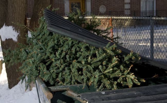 7 ways to keep your old christmas tree out of the trash - Old Christmas Tree