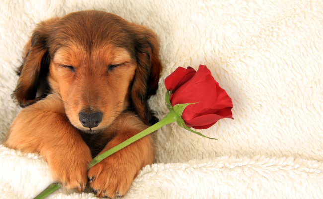 showing love for the animals this valentines day - Valentines Animals