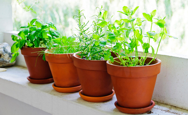 8 Herbs That Can Help Control Diabetes | Care2 Healthy Living