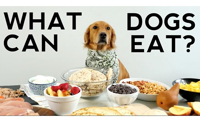 What Human Food Can Dogs Eat Video Care2 Healthy Living
