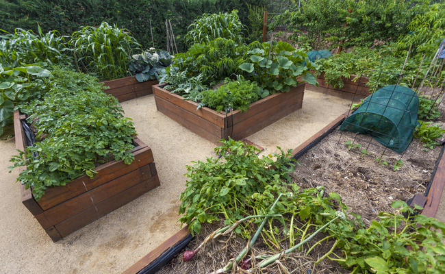 Why You Should Plant A Raised Bed Vegetable Garden – Planting a Raised Bed Vegetable Garden