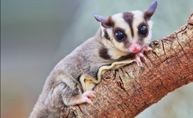 Is It Wrong To Own An Exotic Pet? | Care2 Healthy Living