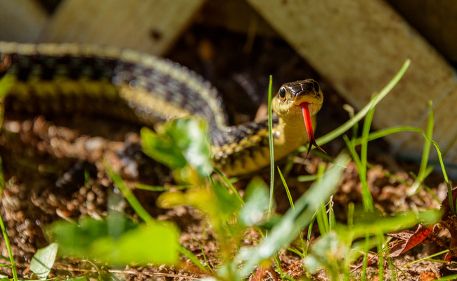 What To Do If You See A Snake In Your Backyard