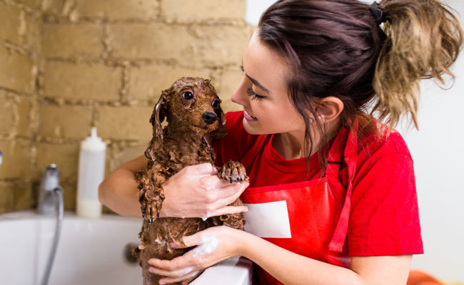 7 benefits of using a self service dog wash care2 healthy living 7 benefits of using a self service dog wash solutioingenieria Gallery