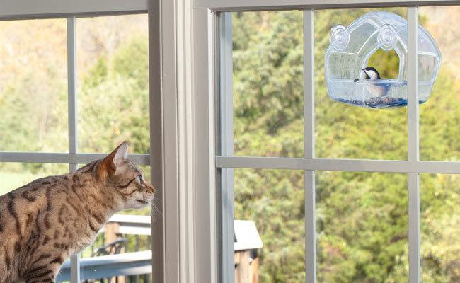 Watching bird feeders help keep cats entertained when home alone