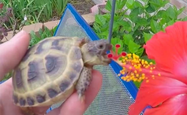 Daily Cute Man Feeds A Flower To His Turtle Care2 Healthy Living