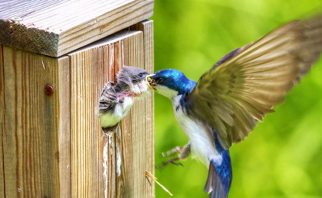Birds In Your Backyard 5 tips to attract birds to your backyard nesting boxes | care2