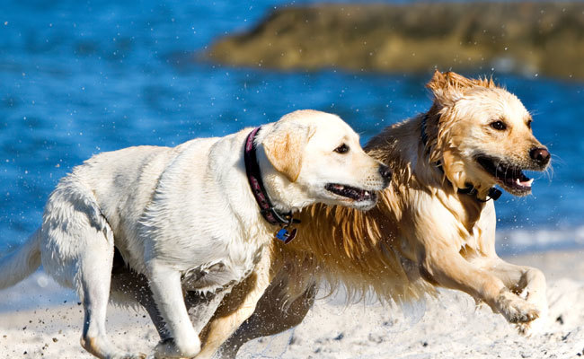 ebbcf1142 What to Know Before Bringing Your Dog to the Beach