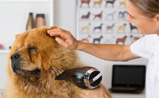 Should you shave a double coated dog care2 healthy living should you shave your double coated dog solutioingenieria Choice Image