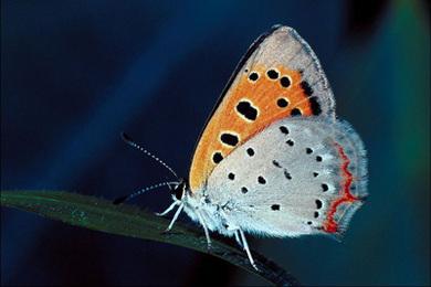 Animal Helper: Butterfly