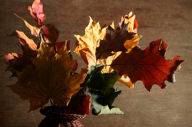 Decorate With the Rich Colors of Fall
