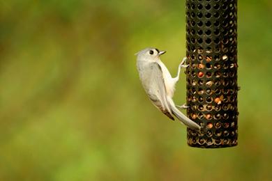 Feng Shui of Abundance: Feed the Birds, Feed the Earth