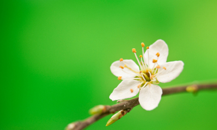 Begin-Again Spring Ritual