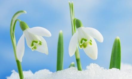 Your Horoscope�s Lucky Flowers
