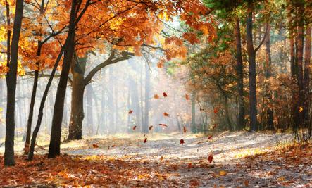 Uplifting Autumn Quotes
