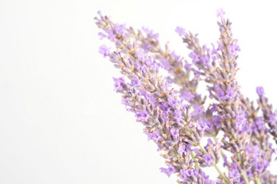 Lavender For the Home: How-To