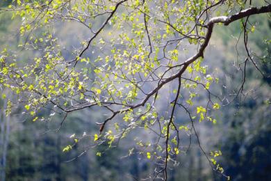 Make a Healing Tree Essence