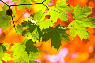 12 Sun Mantras: In Honor of the Fall Equinox