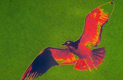 Invoke Help from Birds