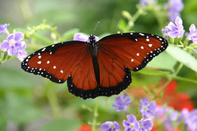 How do butterflies have sex, hot nude desi prostitutes