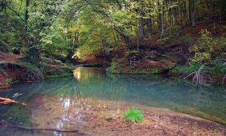 Photo of serene streamscape