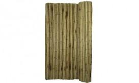 Bamboo next