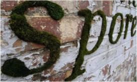 moss-grafitti443