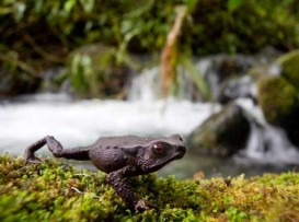 new-frog-3
