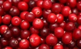 red-cranberries