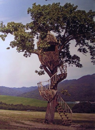 driftwoodegg-322x443 - Do you want to live in a tree house? - Photos Unlimited