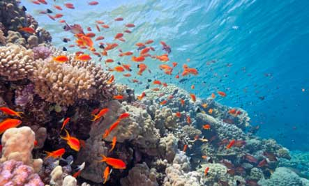 The World's 6 Most Endangered Animal Habitats | Care2 Healthy Living