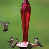 Humming Bird Feeders are wonderful chi attractors