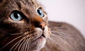 cat-closeup-whiskers
