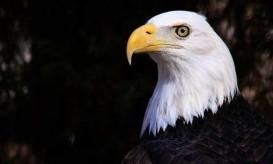 eagle-eye-flickr