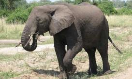 elephant-sarahemcc