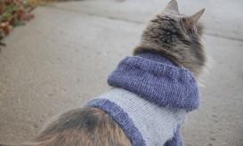 cat-hoodie2-443