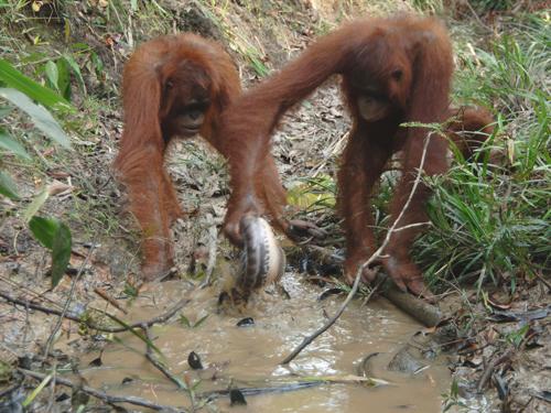orang with fish