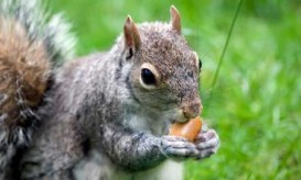 smart-squirrel