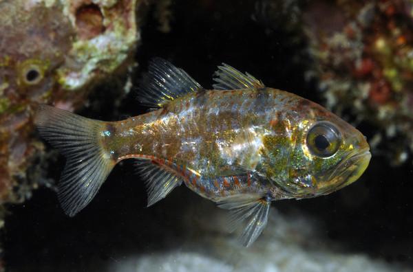 bali fish