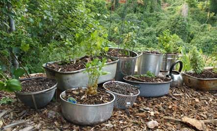 herbs in cooking pots