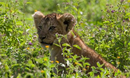 Cub at zoo