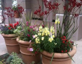 Plants in shades of reds and terracotta pots bring in the fire element