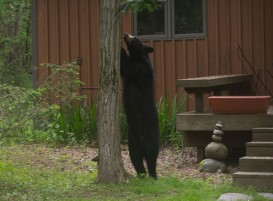 bear-feeder500