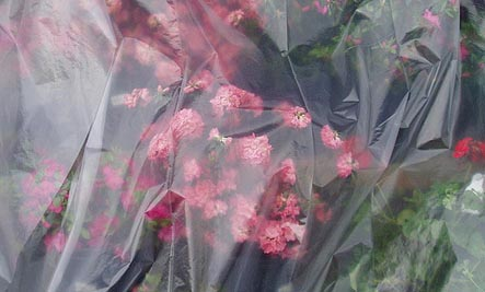 plastic bag flowers