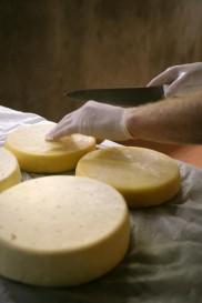 cheesemaking 6