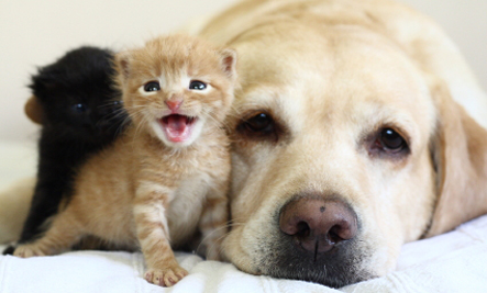 kittenswdog
